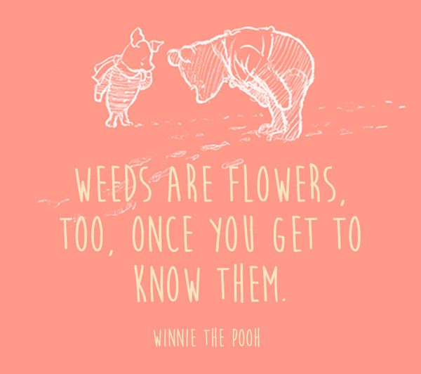 Weeds are flowers, too, once you get to know them. - Winnie the Pooh
