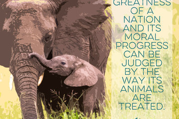 Quotes That Will Melt Every Animal Lover's Heart