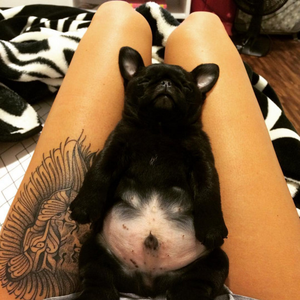 30 Puppy Bellies That Make Everything Okay