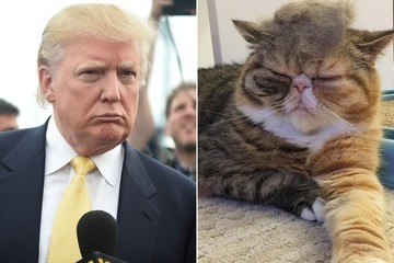 #TrumpYourCat Is the Internet's Latest Form of Pet Torture