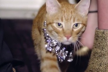 Candice Swanepoel + an Orange Tabby Star in Juicy Couture's Shoppable Video