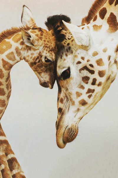 Animal Moms And Babies That Prove A Mother's Love Is Unconditional