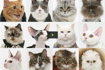 Want to Watch a Video of Cats Wearing United Bamboo Outfits? Of Course You Do!