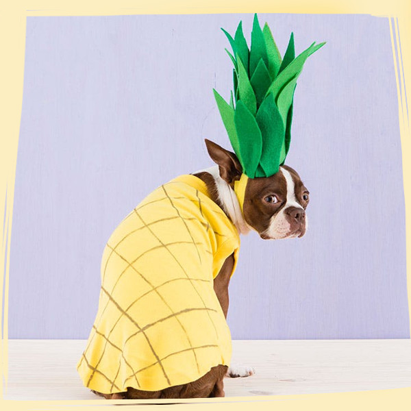 DIY Dog Halloween Costumes You Won't Be Able to Resist