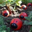 Make Your Own Lady Bugs