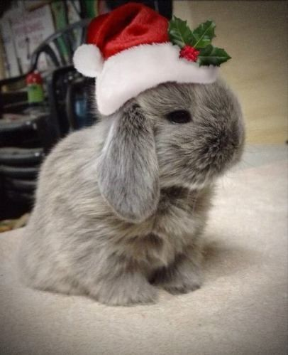 Hoppy Holly