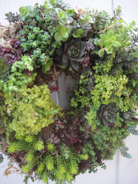Try a living wreath