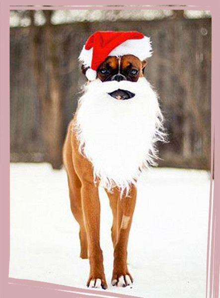 Dog Christmas Cards Ideas For Anyone Who's Obsessed with Their Pup