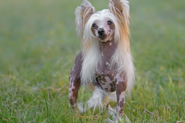 What Rare And Unusual Dog Breed Matches Your Personality?