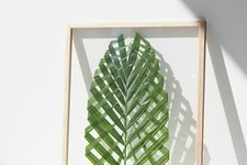 DIY To Try: Framed Leaf Art