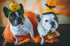 Adorable Pet Halloween Costumes Your Pet Needs ASAP